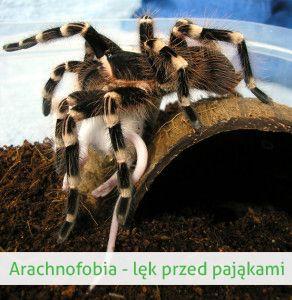 Arachnofobia czyli strach przed pająkami i im podobnymi  http://www.firia.pl/fobie/arachnofobia/
