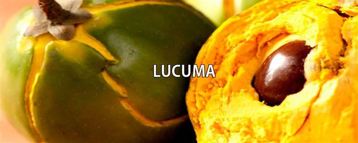 Lúcuma - http://medicinadedios.info/lucuma/ - Lúcuma   Nombre científico: Pouteria lucuma.  Nombres populares: Lúcuma, lúcumo.  Descripción: El lúcumo es un árbol perenne de fuste recto y cilíndrico, que alcanza los quince metros. Su madera es de color claro, grano fino y resistente. La copa es densa y de forma esférica; las hojas se concentran en el ápice de las ramas tiernas, ligeramente pubescentes, de forma elíptica y con la base achatada. Tienen