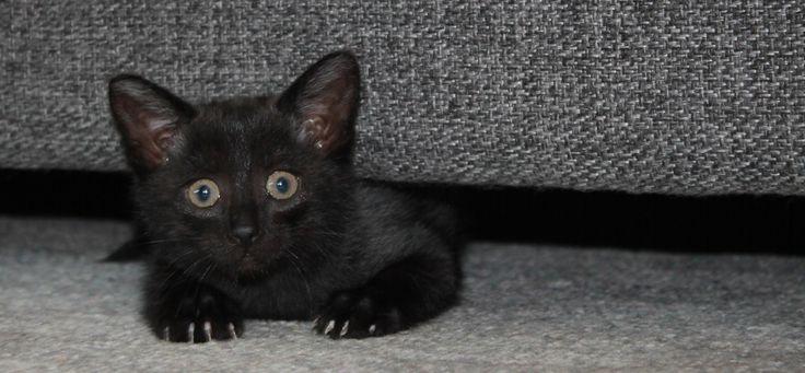 Rita, 7½ weeks old