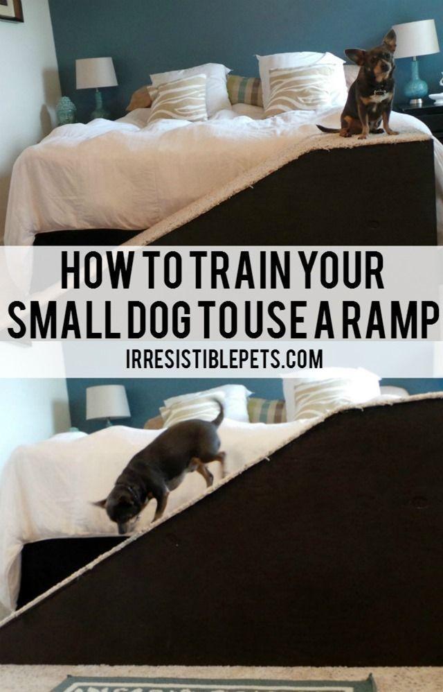 Best Dog Bed For Ivdd