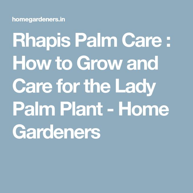 Rhapis Palm Care : How to Grow and Care for the Lady Palm Plant - Home Gardeners
