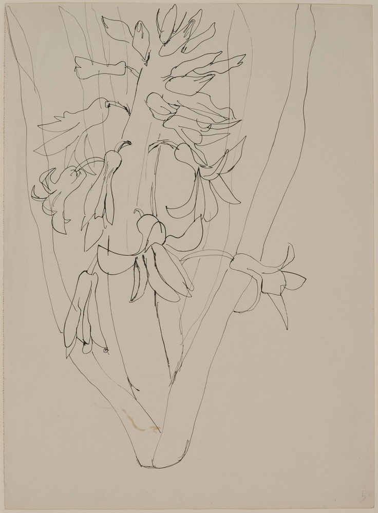 History Of Contour Line Drawing : Best drawings contour line images on pinterest