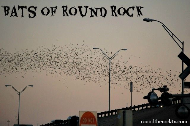 How to see the Bats in Round Rock, Texas | 5 Tips to see Bats