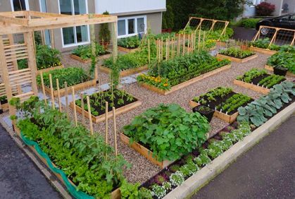 Simple backyard vegetable garden