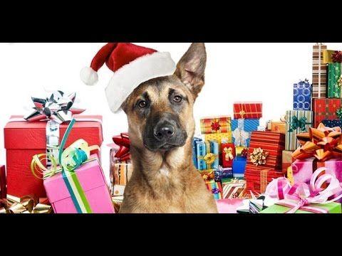 К 9  Рождественские приключения. Новогодний и Рождественский фильм для всей семьи - YouTube