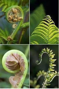 Best 20 fern plant ideas on pinterest ferns lady fern for Baby fern plant