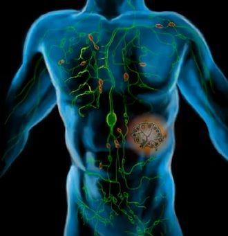 Lymfatický systém je složen z lymfatických cév, lymfatických uzlin a orgánů, jako je slezina, brzlík či mandle. Lymfatický systém má zásadní význam pro opravu tkání a ochranu lidského těla před nemocemi. Nesprávné odvodnění lymfatického systému