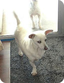 Temecula, CA - Corgi Mix. Meet Corey, a dog for adoption. http://www.adoptapet.com/pet/17924798-temecula-california-corgi-mix