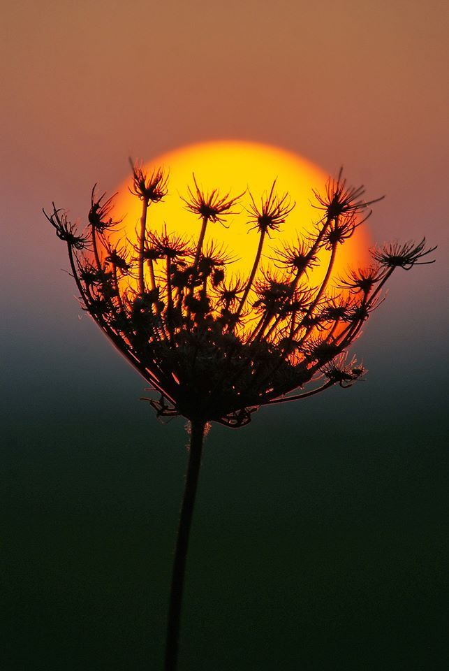 Awesome photo!! Soleil et plante en fusion @zoepicuriste