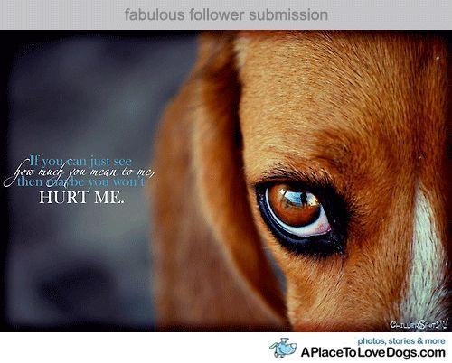 best 25  animal cruelty quotes ideas on pinterest