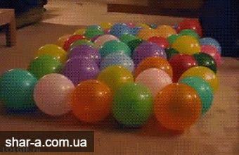 Безудержное веселье маленькой собачки с шариками.🐶 Вот как нужно веселиться! С воздушными шариками можно творить разные веселые штуки не только людям, но и нашим безумным и милым животным. Нужно только применить немного фантазии (как это сделали на день рождения этого милого песика)🌀  А помочь можем в этом мы =) http://shar-a.com.ua/prajs.html  #воздушныешарики #деньрожденияуменя #шарики #радость #веселье #позитив #собачкасшариками #дикаярадость #свояатмосфера