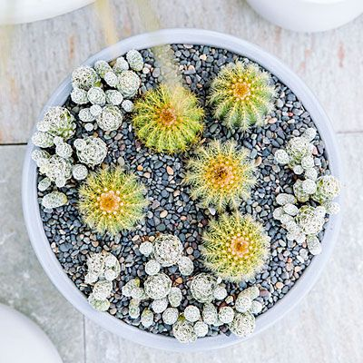 Miniature desert garden - Container Designs with Succulent Plants - Sunset