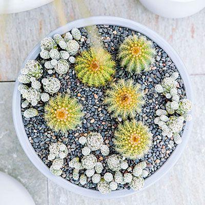 1000+ Bilder zu House Plants ✿⊱╮ auf Pinterest Gärten