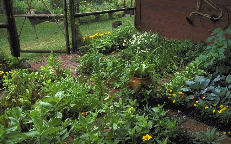 Make efficient use of your space and attract beneficial insects.