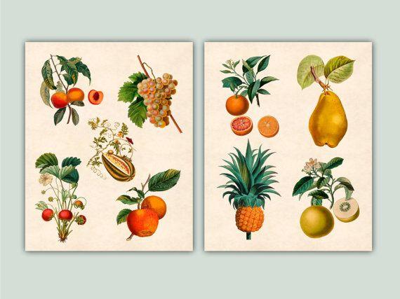 Fruta arte arte de cocina frutas botánicos por DigitalArtLand