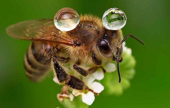 don't forget...bees ARE cute AND essential to the well being of our planet!!