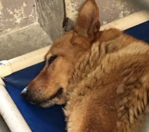 Pet Rescue Report Heartbroken senior dog: Returned 9 years after adoption anena