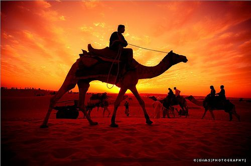 Royal Ride In The Golden Sand
