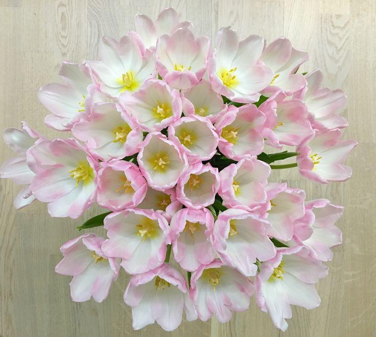 チューリップは春の花です。 Tulips are flowers of spring.