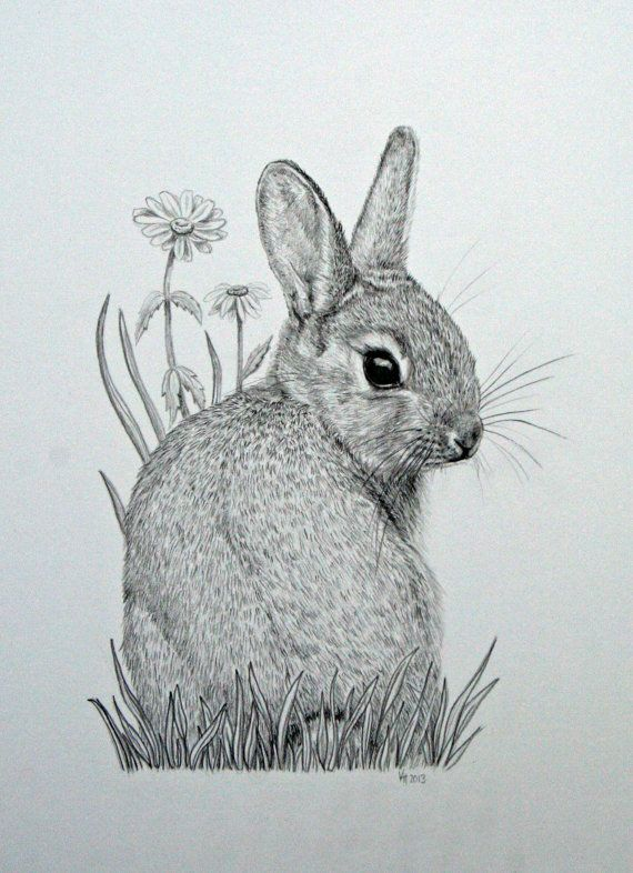 Original mounted pencil drawing of baby bunny rabbit with daisy flowers by Vick Horsley