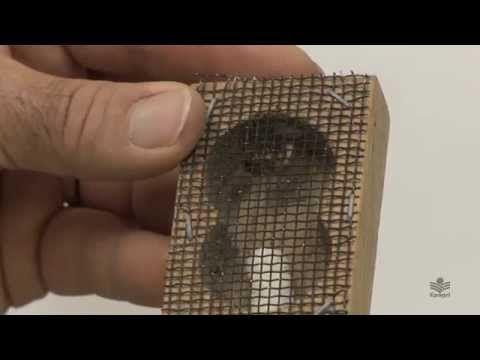 Criação de abelha-rainha HD - YouTube