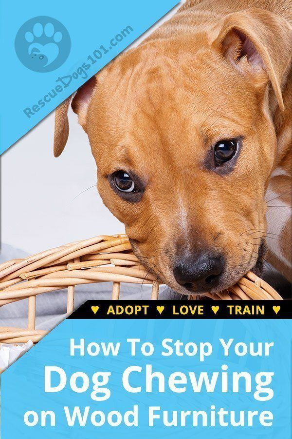 How To Stop A Dog From Chewing On Wood Stop Dog Chewing Dogs And Kids Training Your Dog