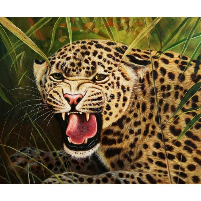 Roaring Jaguar: 1000+ Images About Big Cats Say It With A Roar! On