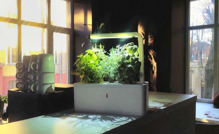 Sistema inspirado em tecnologia da NASA ajuda a cuidar de horta ou jardim dentro de casa