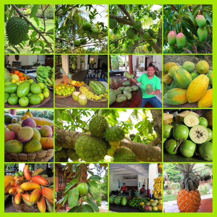 We would like to invite you to try the fruit experience in #LaJorara #experienciaunica