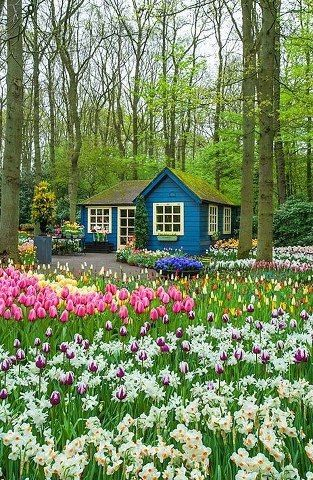 Blue Cottage and Bulbs