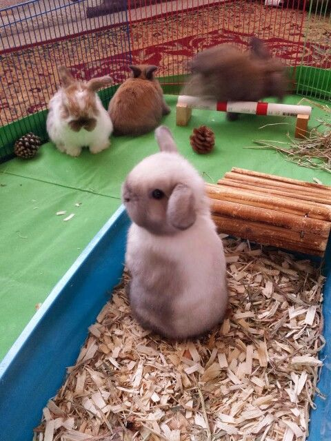 1000+ images about Bunny Ideas on Pinterest | Guinea pigs, Pet pen ...