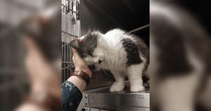 This Senior Cat Cried Out For Help At The Shelter And One Person Didn't Hesitate To …