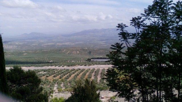 Mar de olivos de Jaen