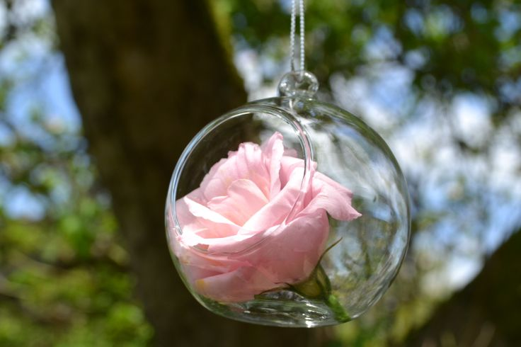 Glass balls filled with roses - Northbrook Park