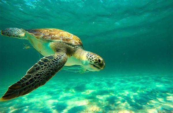 http://www.scoop.it/t/sea-turtle-jewelry/p/4060025000/2016/02/20/what-is-the-sea-turtle-s-favorite-food