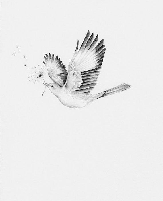 сегодняшний картинки летящей птички карандашом автобус кусок