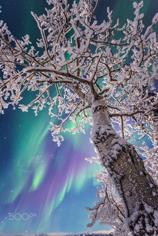 Aurora borealis/Northern lights - title Looking up at the stars - by Jonathan