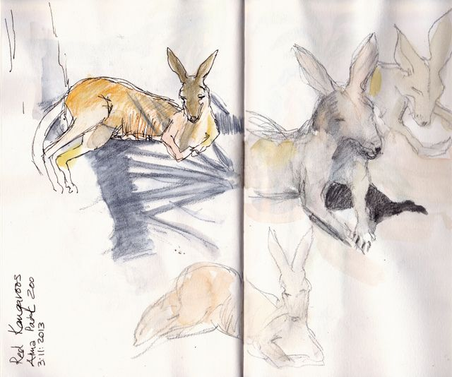 Red Kangaroos resting in the shade. Graphite and watercolour pencil in S&B Alpha sketchbook - © 2013 Carol Lee Beckx