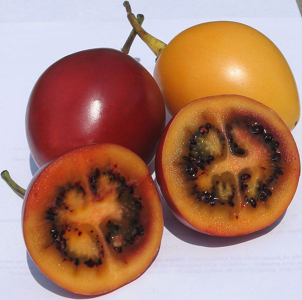 Tamarillos-Tree tomato (TOMATE DE ARBOL, the name we use in Ecuador where this plant is native), is one of those hidden wonders. Rich in menerals, vitamins, and with lots of healing properties, it is a delight, IF YOU KNOW HOW TO EAT IT. Boil the fruit for no more than 5 minutes or until you see that the skin is opening. Remove the skin and blend the rest with milk, yogurt, or water, and add sugar or honey. Strain the juice to remove the seeds. You can make desserts or salsas too.