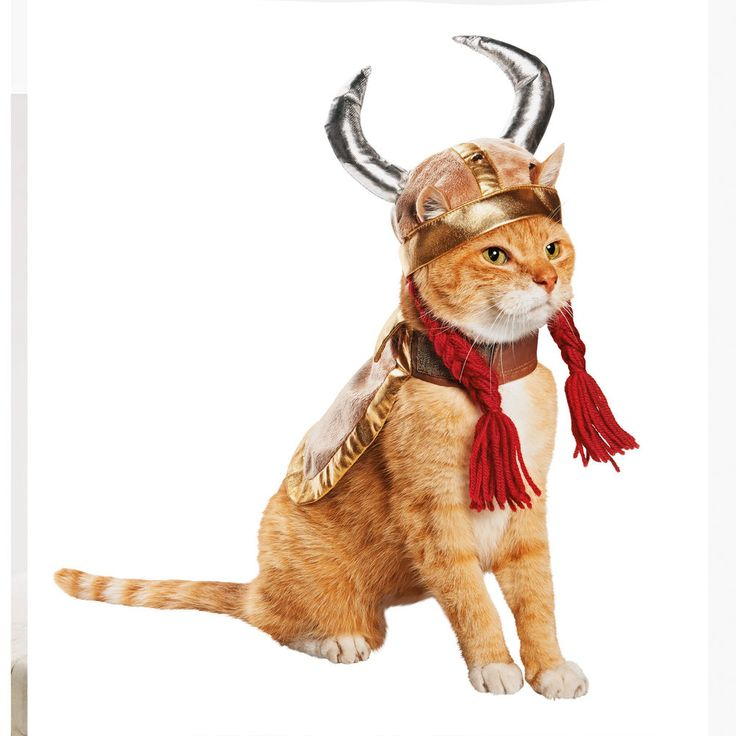 Petco Viking Halloween Costume for Cats, One Size Fits Most #Petco