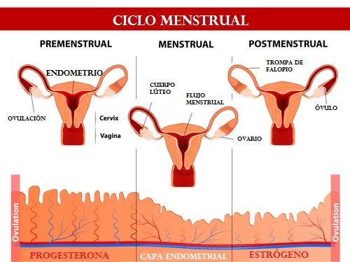 Probablemente haz oído hablar de que tu ciclo menstrual debe ser aproximadamente de 28 días. Pero, ¿qué significa eso exactamente?