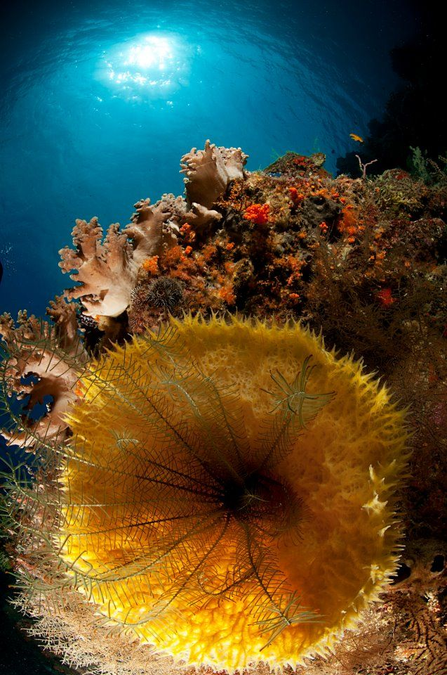 Wakatobi Dive Resort -Sponges..