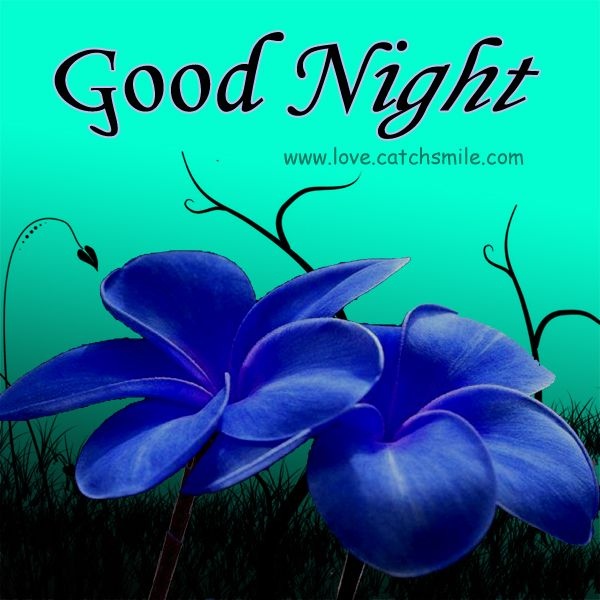Cute Good Night | Good Night Wishes with Cute Beautiful Blue Flowers | Good Night Images ...