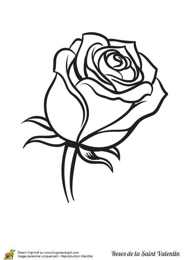 1000 images about coloriages pour les amoureux on - Coloriage d une rose ...