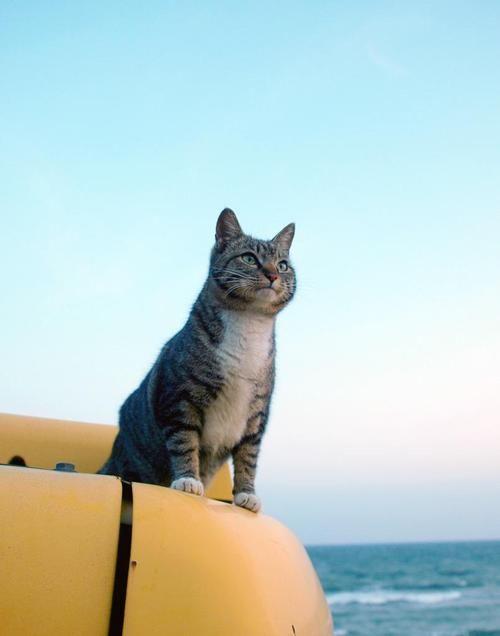 イケメン猫さんの画像下さい! : あじゃじゃしたー