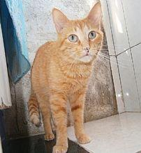 Gato Antonio. Ojos grandes y curiosos, que tienen mucho que compartir contigo.