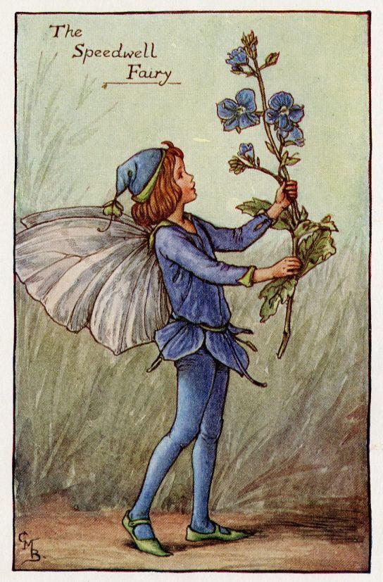 Speedwell Flower Fairy Vintage Print, c.1927 Cicely Mary Barker-boekillustratie plaat
