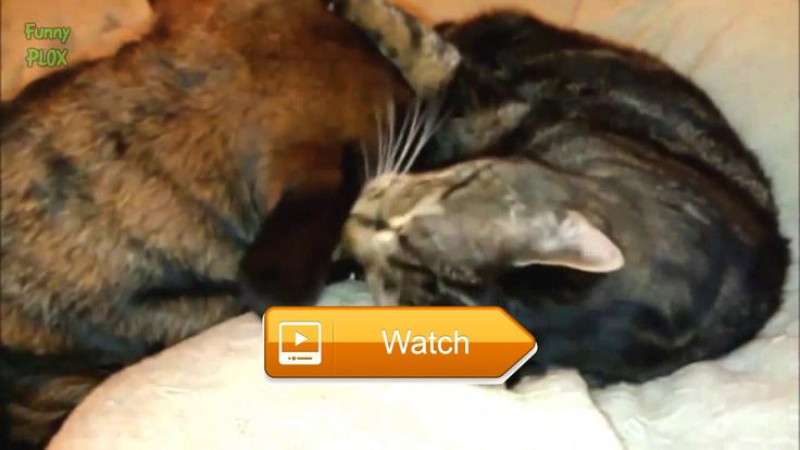Funny cat Japanese Funny dogs Funny things and funny cat talk  Funny cat Japanese Funny dogs Funny things and funny cat talk Wellcome to channel Funny cats and dogs Subscribe NOW and watch daily funny Videos  on Pet Lovers