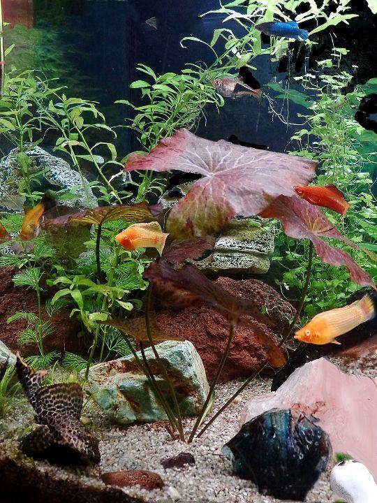 Le jour des poissons de marinette a aquascape for Ornamental fish tank