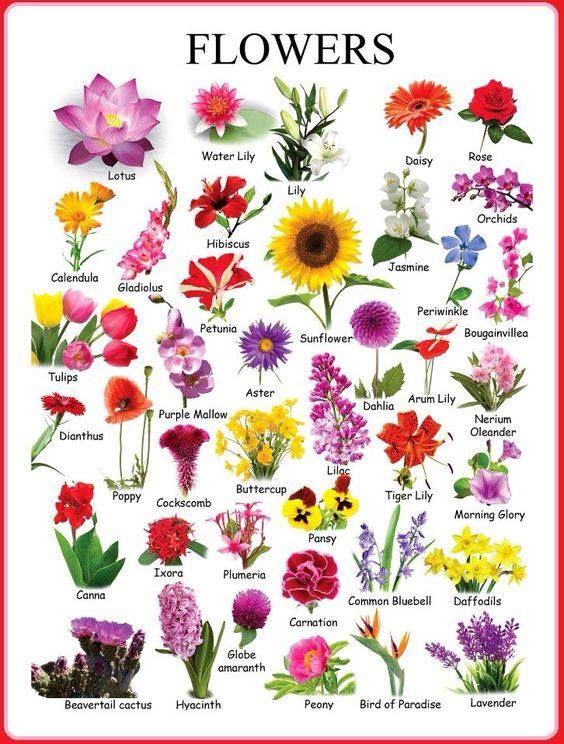 Цветы на английском #english #vocabulary #flowers #английский #цветы